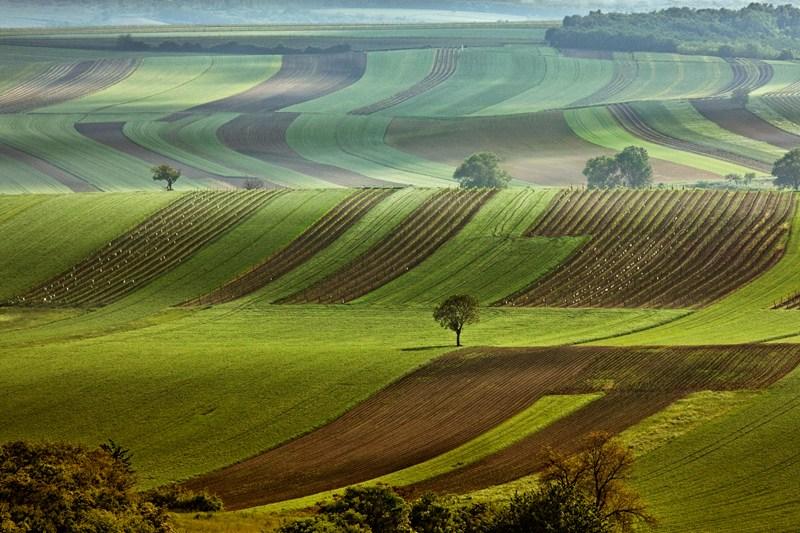 veld uitzicht moravie tsjechie fietsen